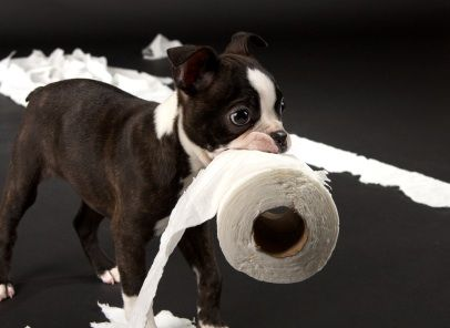 Dog Diarrhea: What to Do If It Lasts more than 2 days