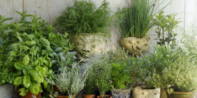 What to do with an abundance of herbs