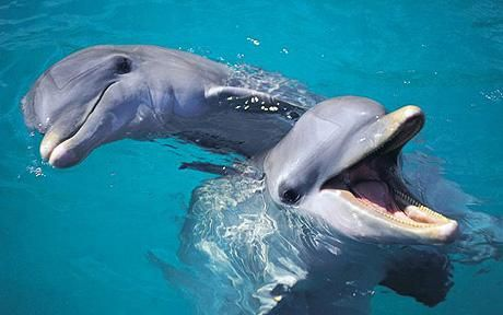 Swim with dolphins: Bucket List, Bucketlist, Animals, Sea Life, Dolphins, Favorite Animal, Things, Whale