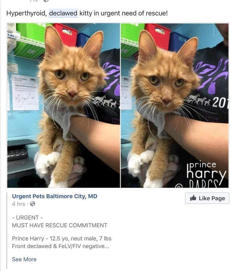 Pin on DECLAWED CATS SUFFER