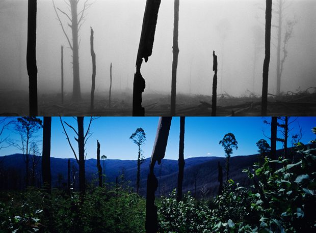 Black Saturday bushfire: before and after. February 7th, 2009 - 172 lives lost in Victoria - Australian Geographic