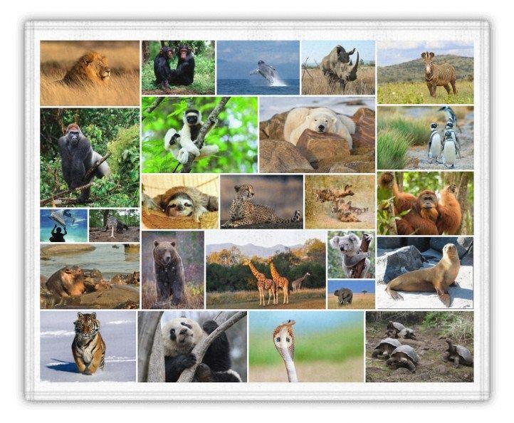 25 especies en peligro de extinción en el mundo
