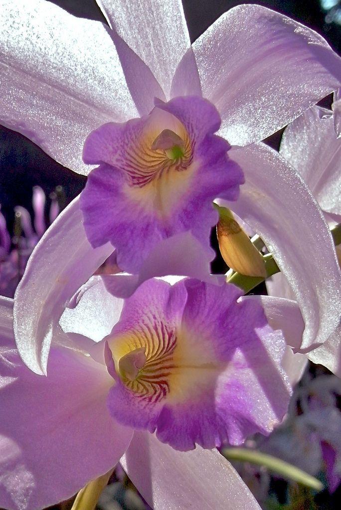 Orquideas especiales