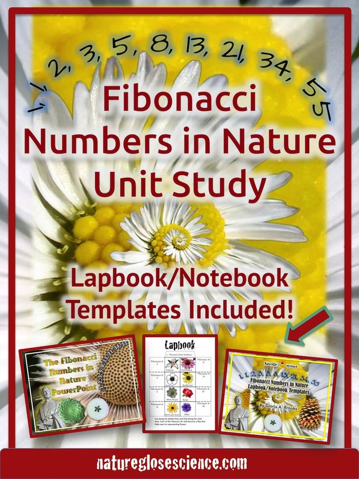 Fibonacci sequence formula, what is the fibonacci sequence, maths in nature, examples of math in nature, math found in nature, mathematics in nature examples, nature mathematics, fibonacci for kids