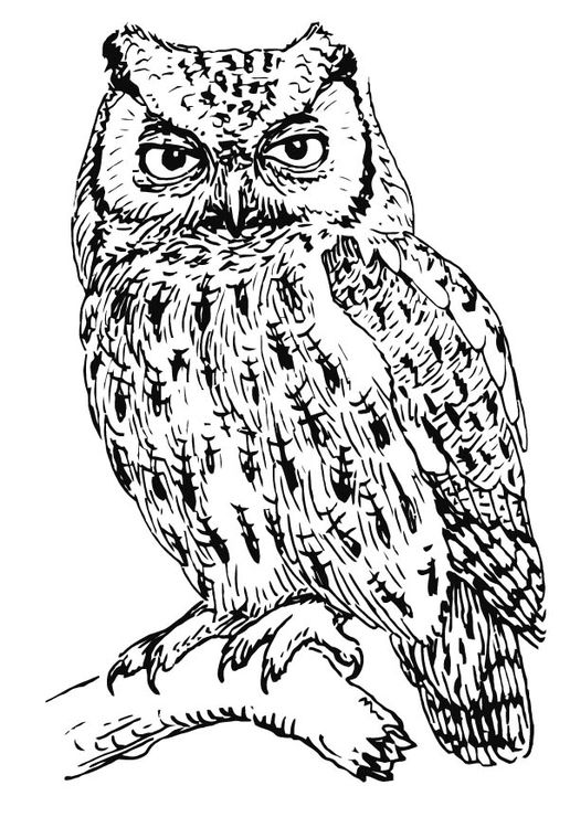 Coloring page owl - screech owl