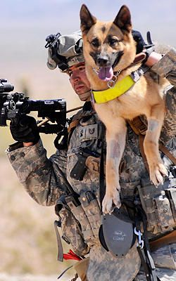 Soldier Dogs: The Four-Legged Heroes Of Iraq And Afghanistan