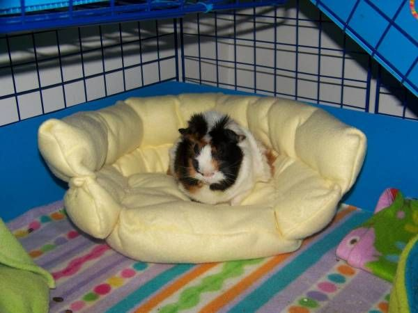 161 B Sta Bilderna Om Rat Toys Diy P Pinterest Hamstrar