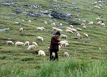 Shepherd - Wikipedia, the free encyclopedia