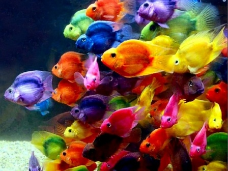 Colorful fish in ocean - photo#19