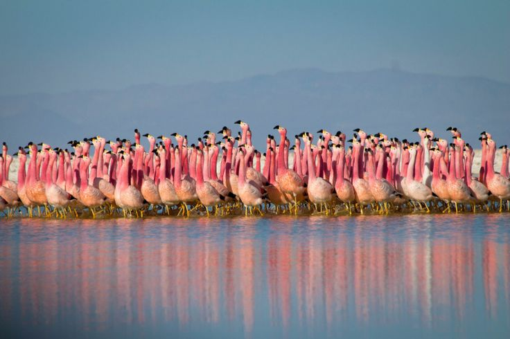 Okay flamingos now let's get in formation (Picture: BBC)