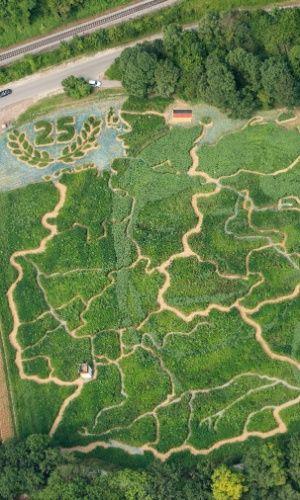 As fronteiras dos 16 Estados e os principais rios da Alemanha formam um labirinto produzido com vegetação de uma fazenda da cidade de Utting, no sul do país. Com 3 km de extensão e cultivado desde abril, o labirinto homenageia os 25 anos da reunificação alemã e ficará aberto ao público da próxima quarta-feira (22) até o dia 27 de setembro