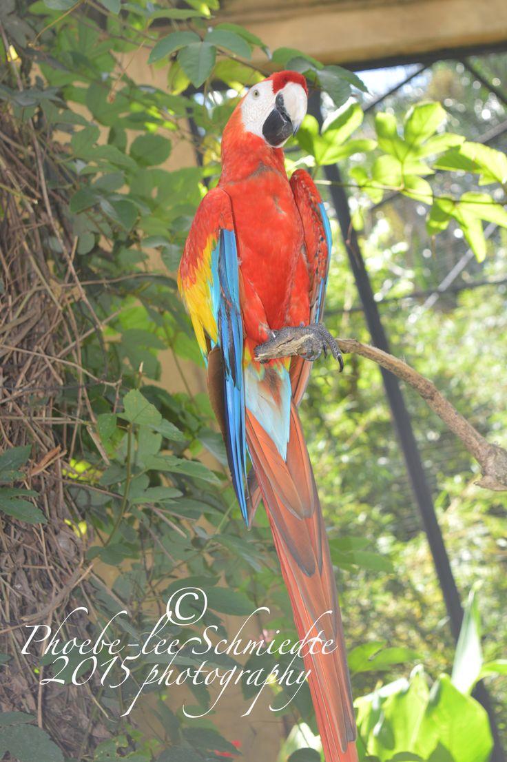colour parrot in bali, 2014