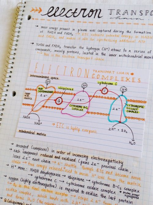 notes for biology test This is a modified version of the 2013 ap biology exam • this practice exam is provided by the college board for ap exam preparation note: this publication.