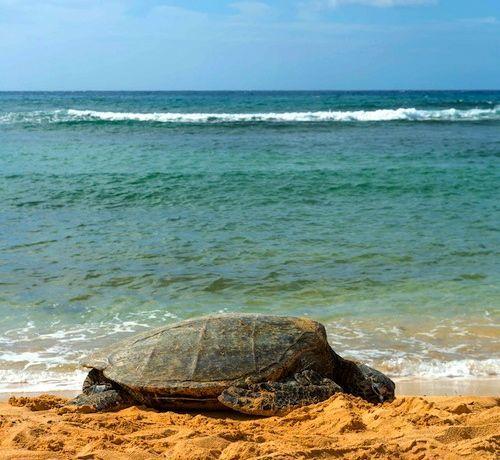 South shore close to hyatt. Public beach with reef breaks for calmer shores. Lots of sea turtle here.  Poipu Beach, Kauai
