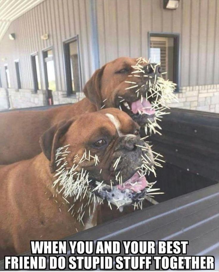 funny-animals-3-12 funny animal pictures pictures funny Animals
