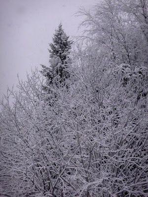 Satu Ylävaaran valokuvia: Whiter shade of the pale