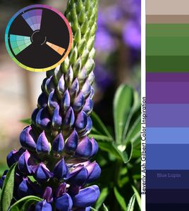 Beverly Ash Gilbert Color Inspiration - Blue Lupin. From Be Inspired: http://www.beverlyashgilbert.com/bein…/colorinspiration.html