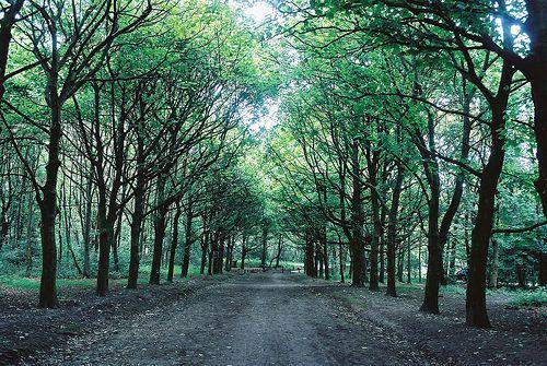green trees xxxx
