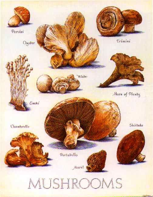 Edible Mushrooms Illustration.  Do you want to see how mushrooms grow?  Now you can do it yourself at home. mokumoku.my                                                                                                                                                      More
