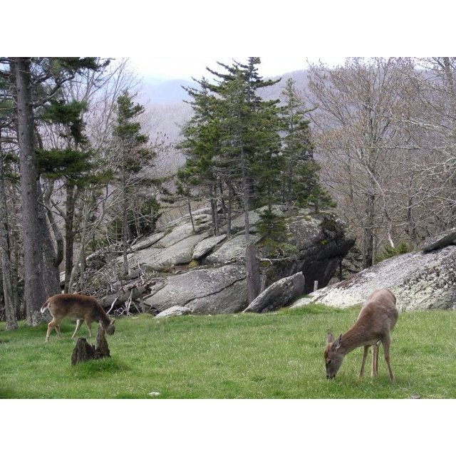 Best Places To Hike Boone Nc: 31 Best Images About Grandfather Mountain On Pinterest