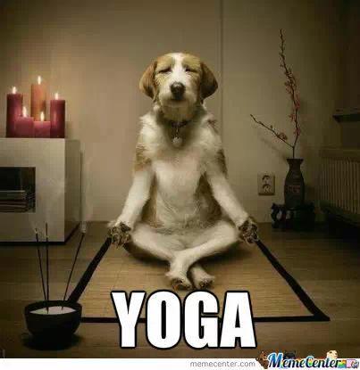 Learn to teach dog yoga meme