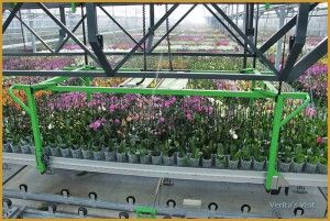 A view into an orchid greenhouse