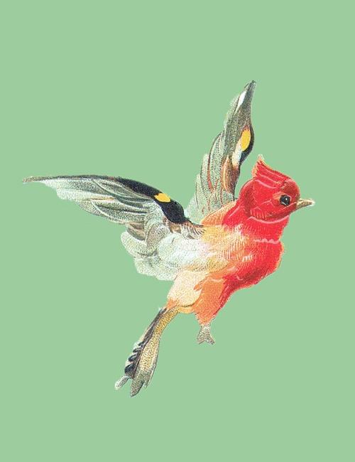 Ansichtkaart vogel met groene achtergrond