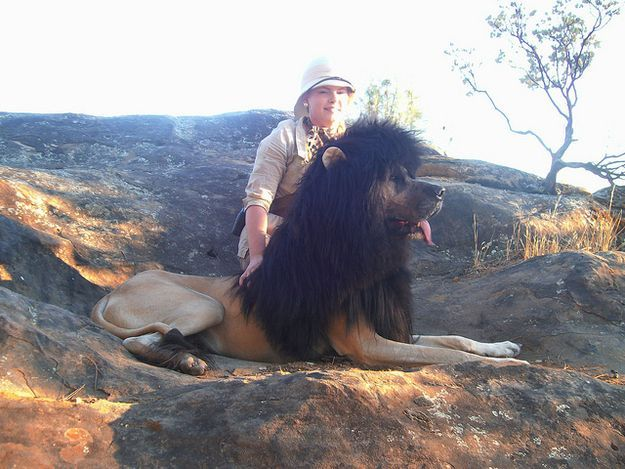 Great Dane Lion Costume