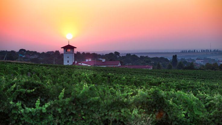 В долине Лефкадия каждый гость попадает в процесс, который можно назвать рождением вина. Ведь благодаря экскурсиям по долине вы пройдёте весь путь этого благородного напитка. В Лефкадии вы не только увидите плантации винограда, узнаете историю каждого сорта, загляните на винодельню и продегустируете лучшие образцы местного производства, но и будете дышать тем же воздухом, что и каждая гроздь винограда, а также получите максимальное удовольствие от вкуса и аромата наших вин.