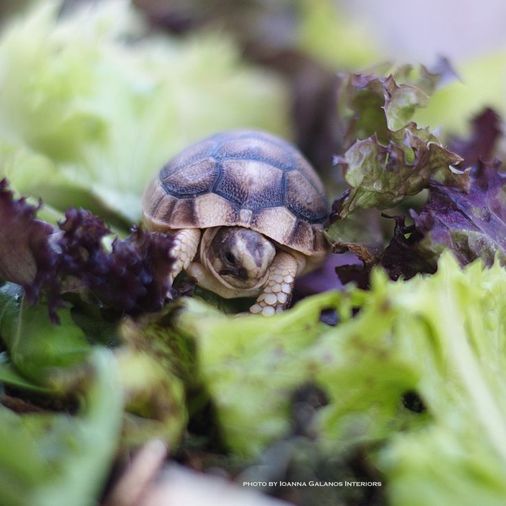 My baby girl Turtle, just one day old 🎀 Photo by Ioanna Galanos Interiors