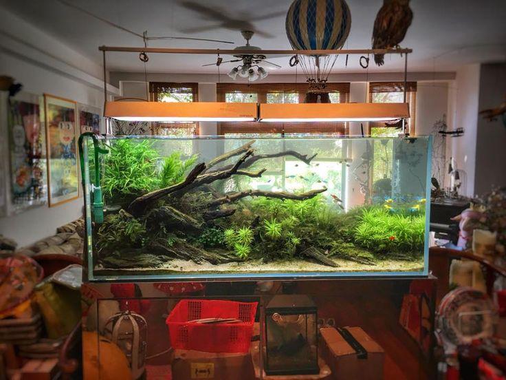 502 best AQUASCAPES images on Pinterest Aquarium ideas Planted