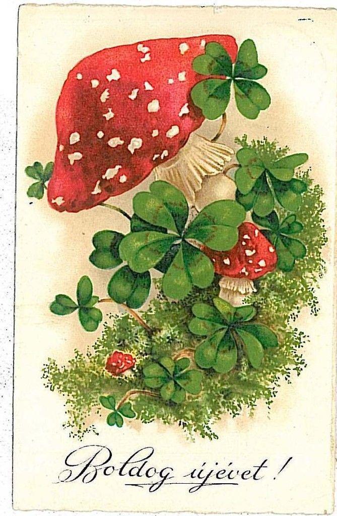 Днем, грибы открытки