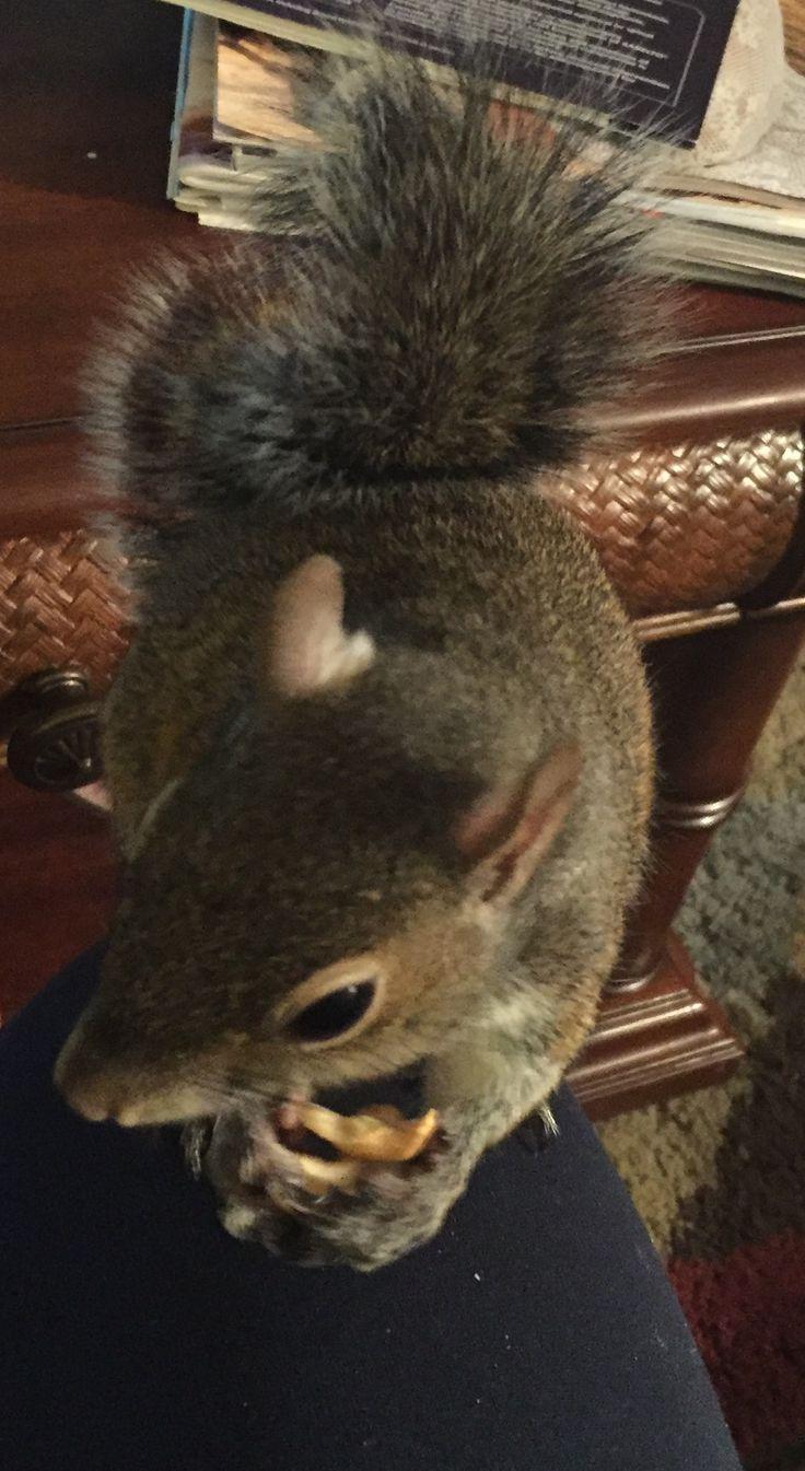 1010 best squirrels images on pinterest squirrels chipmunks and