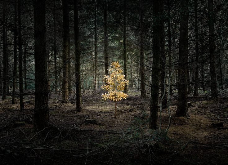 этих картинки призрачного леса неоспоримым