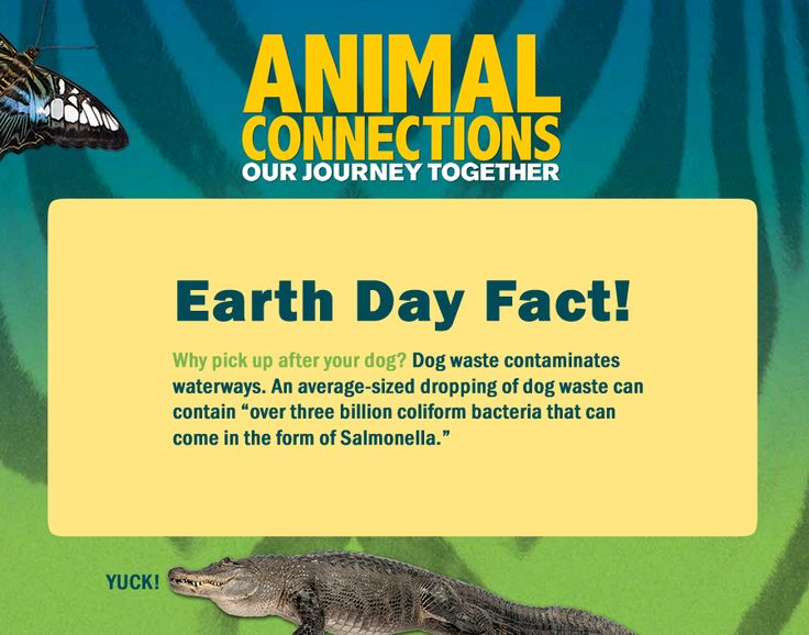 How can pet owners be responsible? Just follow this Earth Day fact to keep the planet (and those living on it) healthy! #AnimalConnections http://animalconnections.com/ #earthday