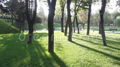 Shade Trees On Grass - Download From Over 36 Million High Quality Stock Photos, Images, Vectors, Stock Video. Sign up for FREE today. Video: 60050995