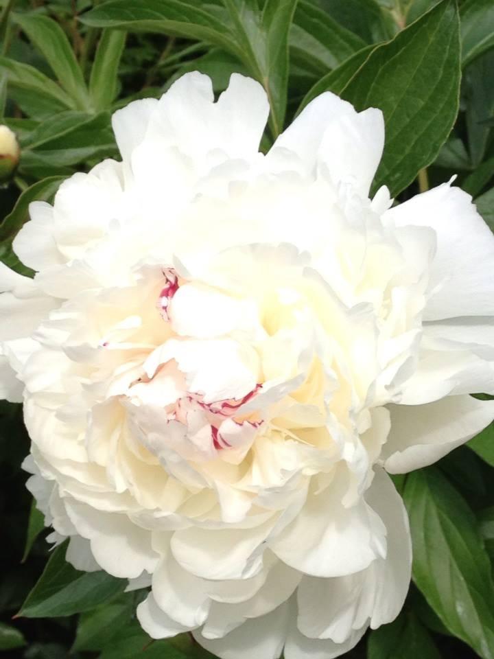 Floral Arrangements Yakima : Best wa yakima co images on pinterest