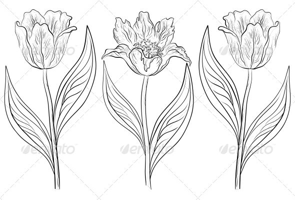 pics for open tulips drawing watercolors pinterest vector shapes vector file and hand drawn