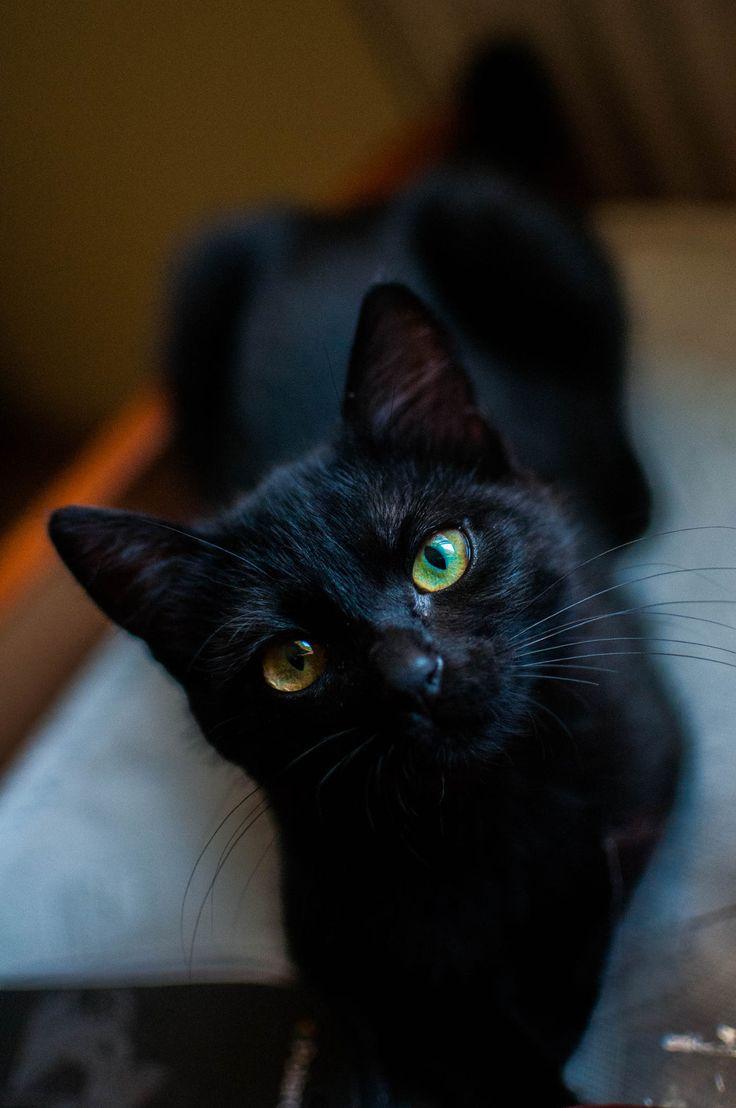 Sleek black cat, beautiful.