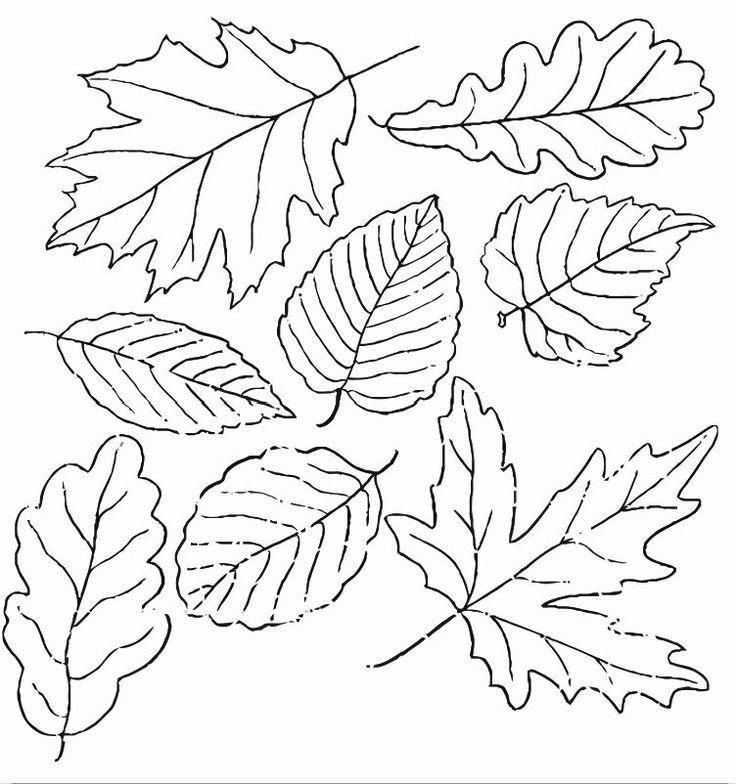 Картинки листьев для детей для раскрашивания