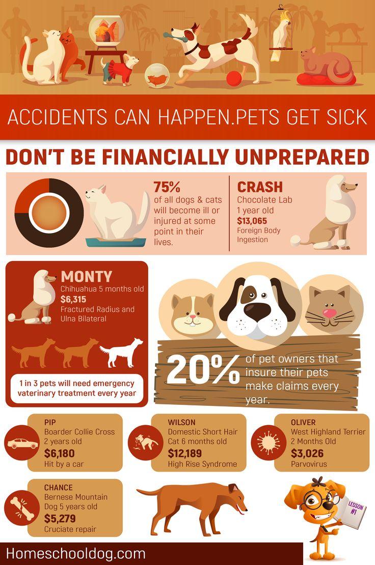 The best pet insurance в 2020 г (с изображениями)