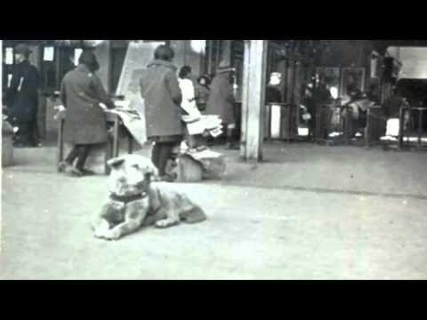 Difunden foto inédita del perro Hachiko - YouTube