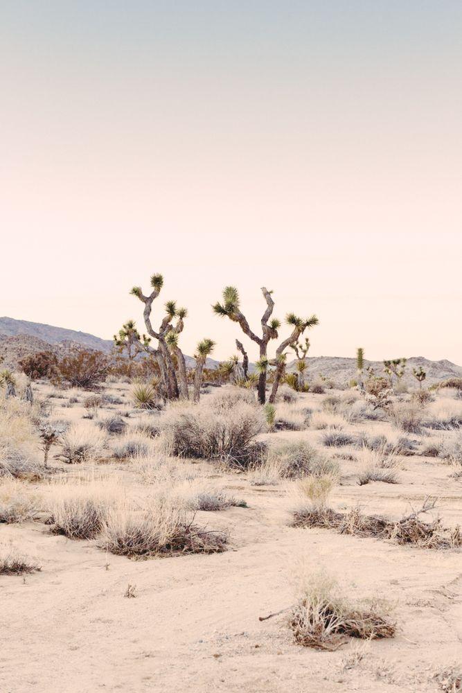pink desert photograph