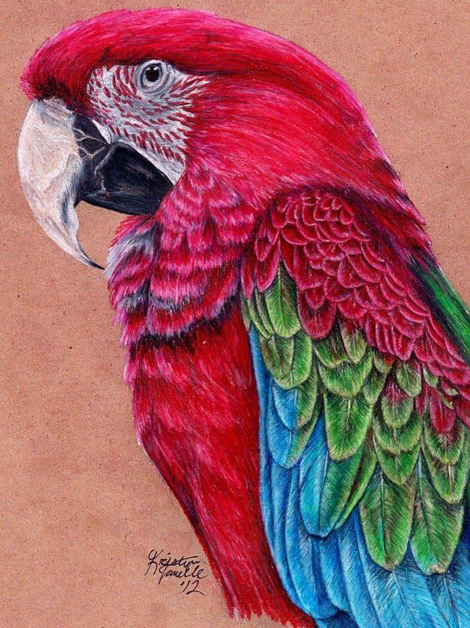 25 beste Vogelzeichnungen für Ihre Inspiration!