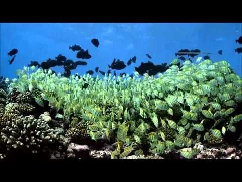 Coral Islands Relaxation Video With Relaxing Piano Music By Termininja - www.imagerelaxati...