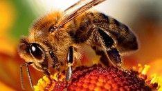 Arının ölüsü bile faydalı      #arı #bal #kovan #insan #anzer