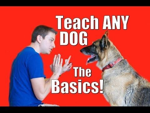 Dog Training 101: How to Train ANY DOG the Basics - http://www.doggietalent.com/2014/11/dog-training-101-how-to-train-any-dog-the-basics/
