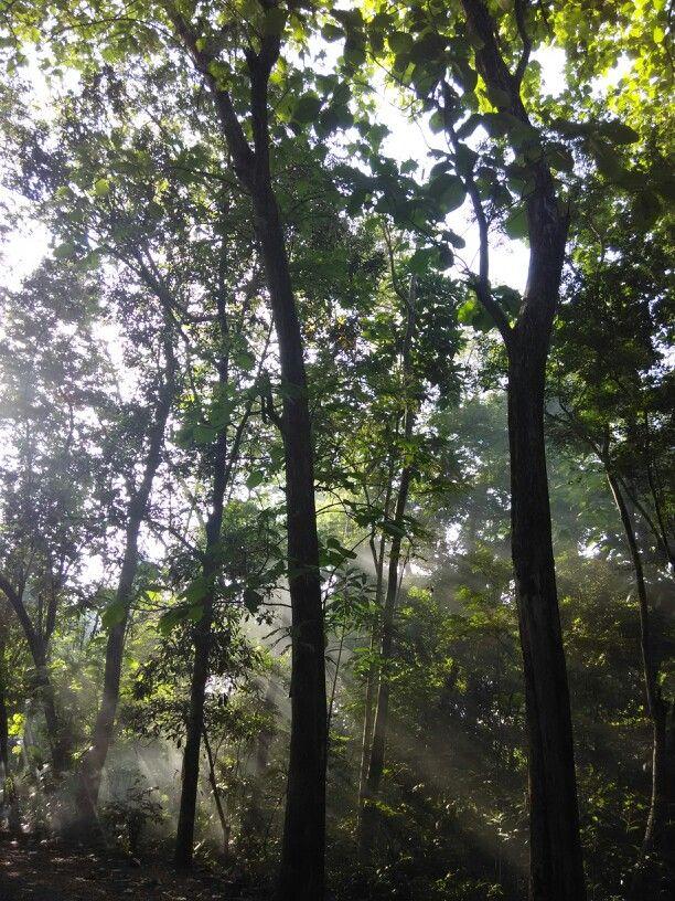 Rural Jogja in the morning