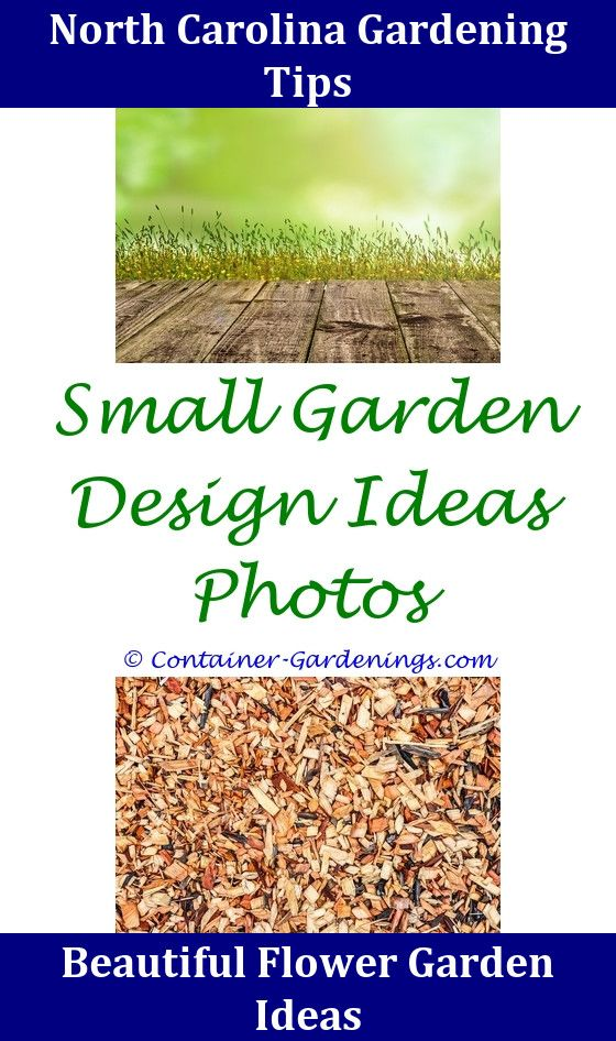 Pin By Rock Garden Ideas On School Garden Ideas Container