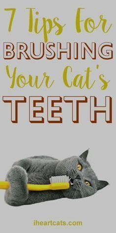 Cat Care Tips... 7 Tips For Brushing Your Cat's Teeth